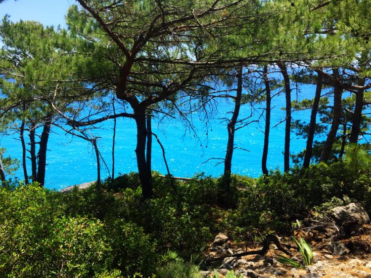 Blaues Mittelmeer unter Pinien