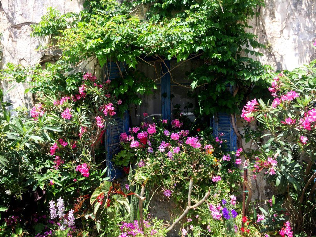 Fenster und Blüten