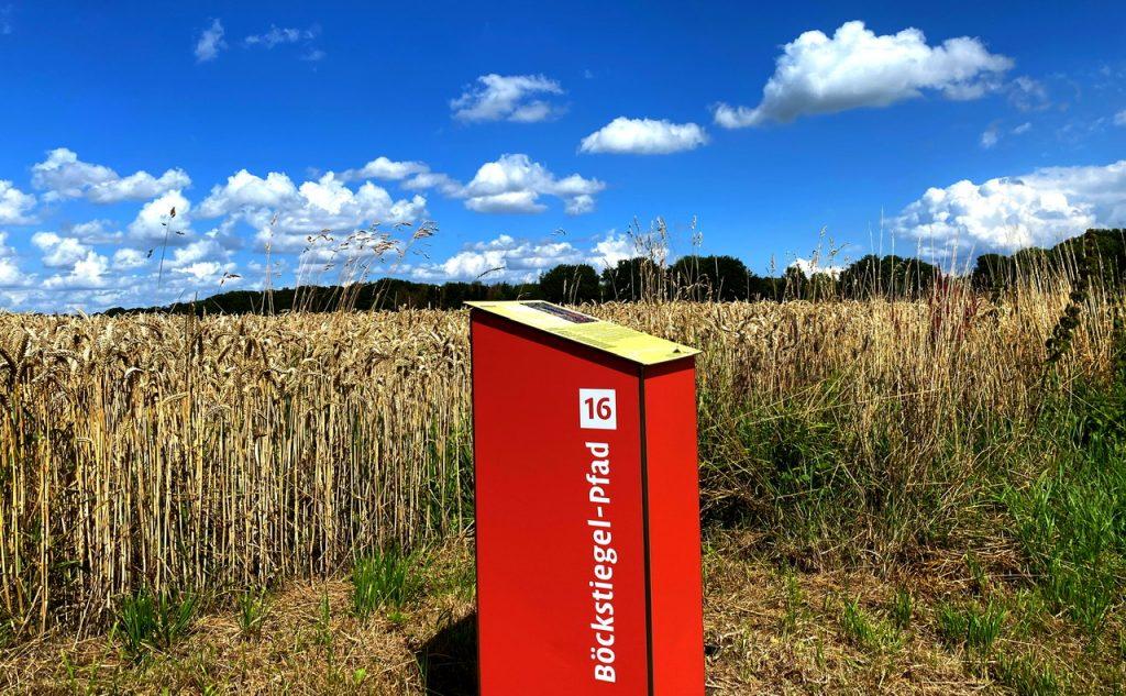 Reife getreidefelder in Arrode bei Werther/Westalen am teutoburger Wald. Kunstpfad, Böckstiegelpfad